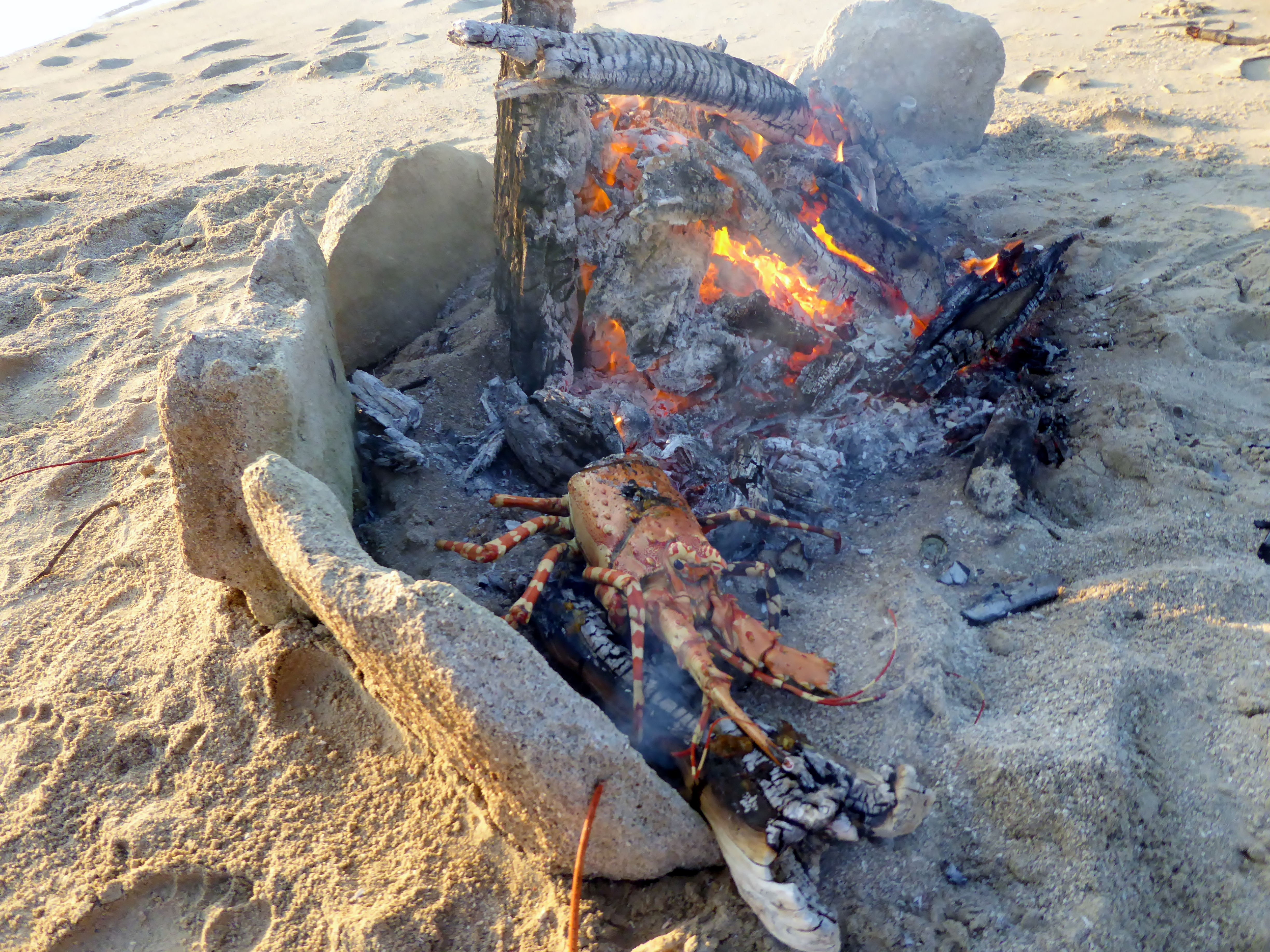 Fire on the beach cooking crayfish.