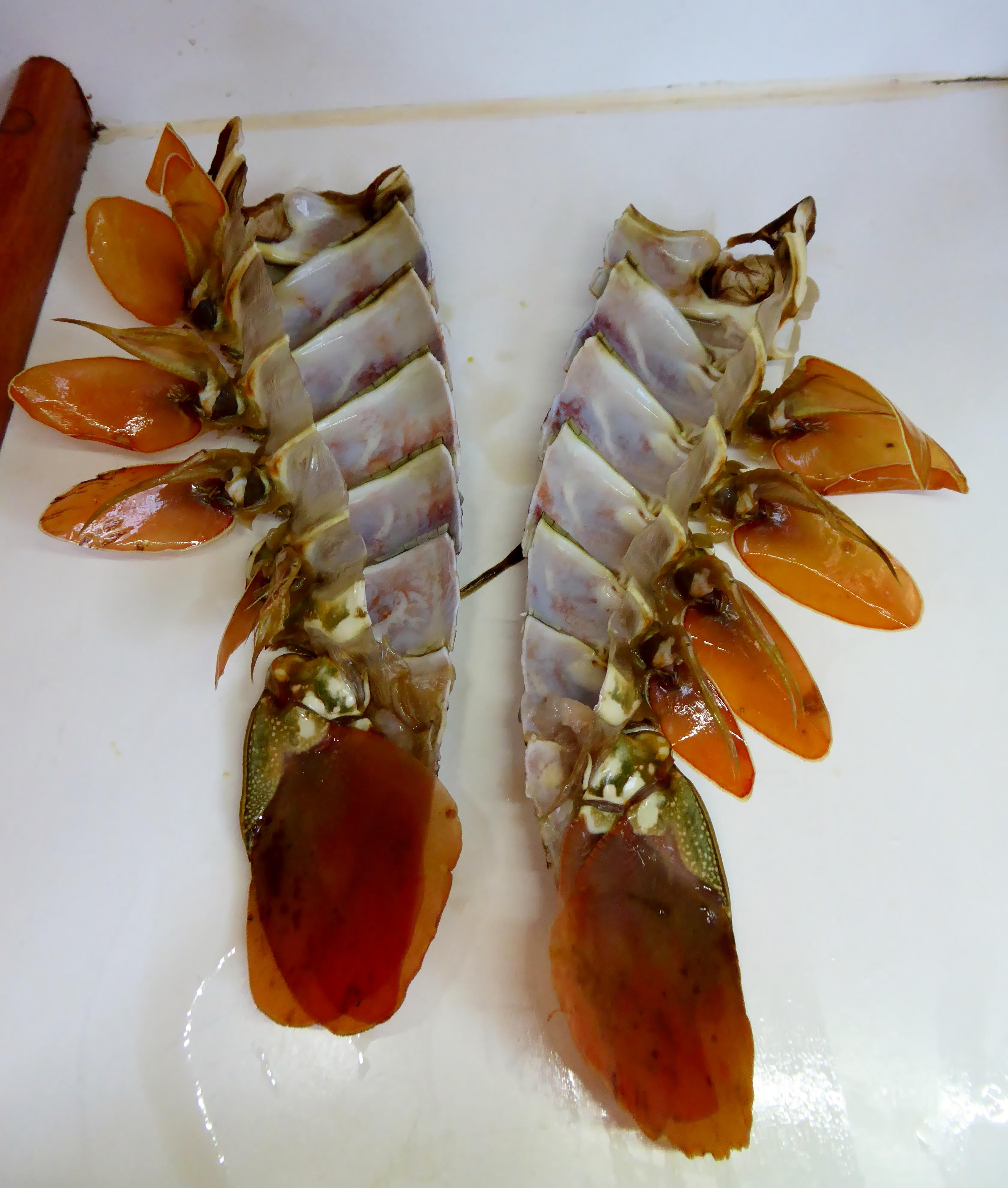 Crayfish Mornay - the empty shells
